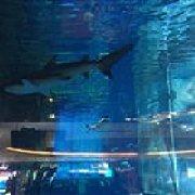 美人鱼海洋主题餐厅