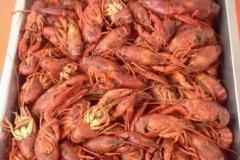甘泉地区 毛脚龙虾